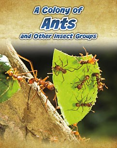A Colony of Ants: and Other Insect Groups