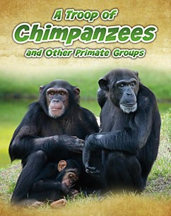 A Troop of Chimpanzees: and Other Primate Groups