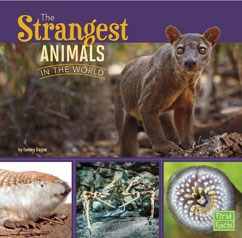 The Strangest Animals in the World