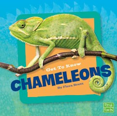 Get to Know Chameleons