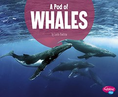 A Pod of Whales