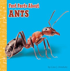 Fast Facts About Ants