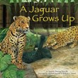 A Jaguar Grows Up