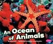 Ocean of Animals