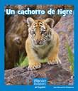 Un cachorro de tigre