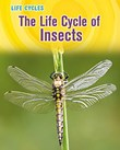 Life Cycle of Insects