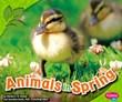 Animals in Spring