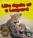 Life Cycle of a Leopard: A Sequence and Order Text