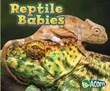 Reptile Babies
