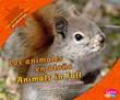 Los animales en otoño/Animals in Fall