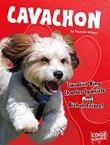 Cavachon: Cavalier King Charles Spaniels Meet Bichon Frises!