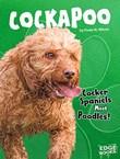 Cockapoo: Cocker Spaniels Meet Poodles!