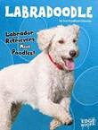 Labradoodle: Labrador Retrievers Meet Poodles!