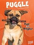Puggle: Pugs Meet Beagles!