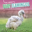 All About Baby Flamingos