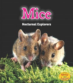 Mice: Nocturnal Explorers