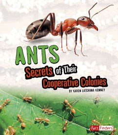 Ants: Secrets of Their Cooperative Colonies
