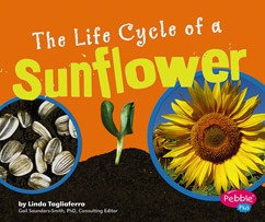 The Life Cycle of a Sunflower