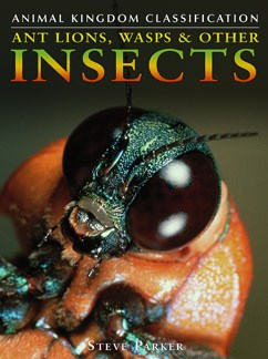 Ant Lions, Wasps and Other Insects