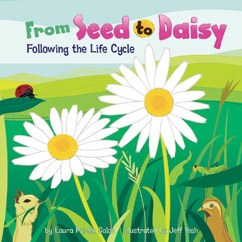 From Seed to Daisy: Following the Life Cycle