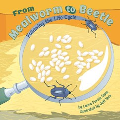 From Mealworm to Beetle: Following the Life Cycle