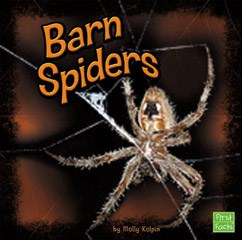 Barn Spiders
