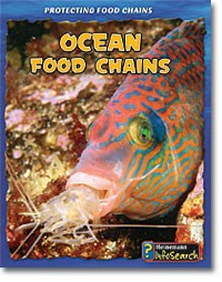 Ocean Food Chains