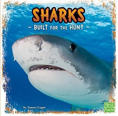 Sharks: Built for the Hunt