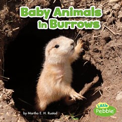 Baby Animals in Burrows