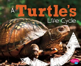 A Turtle's Life Cycle