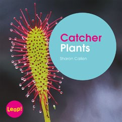 Catcher Plants