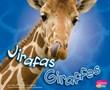 Jirafas/Giraffes