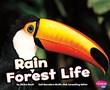 Rain Forest Life