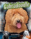 Labradoodle: A Cross Between a Labrador Retriever and a Poodle