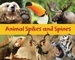 Animal Spikes and Spines