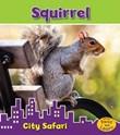 Squirrel: City Safari