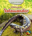 Life Story of a Salamander