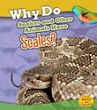 Why Do Snakes and Other Animals Have Scales?