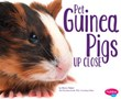 Pet Guinea Pigs Up Close