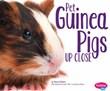 Pet Guinea Pigs Up Close