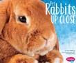 Pet Rabbits Up Close