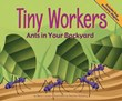 Tiny Workers: Ants in Your Backyard