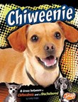 Chiweenie: A Cross Between a Chihuahua and a Dachshund
