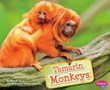 Tamarin Monkeys