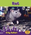 Rat: City Safari