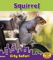 Squirrel: City Safari