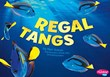 Regal Tangs
