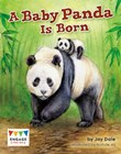 A Baby Panda is Born