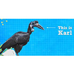 Karl&#39&#59;s New Beak