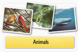 PebbleGo Animals Module image